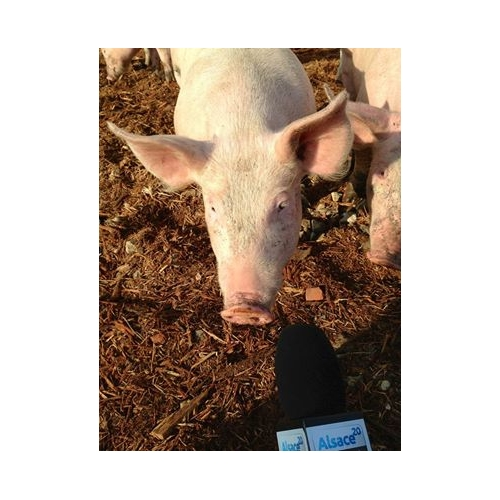 Colis Porc Bio
